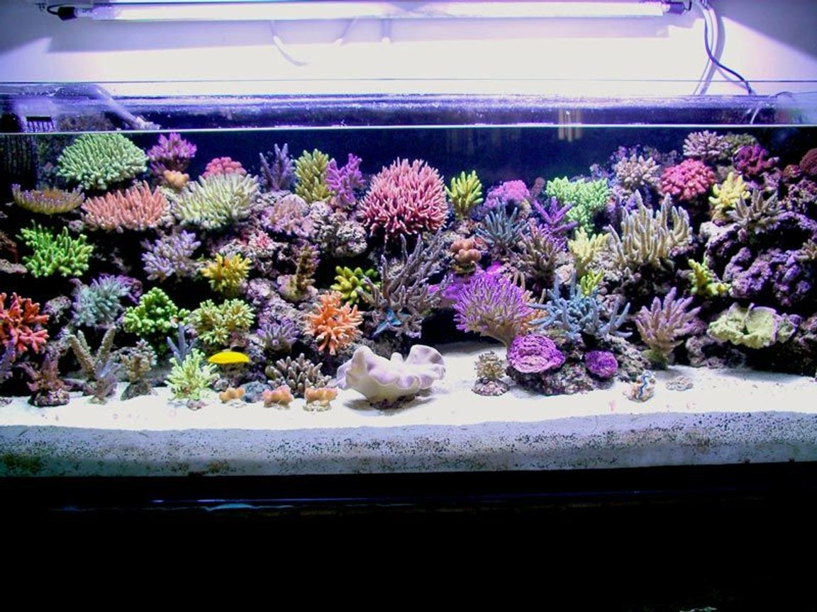 200 gallons reef tank (mostly live coral and fish) - reef tank evolution