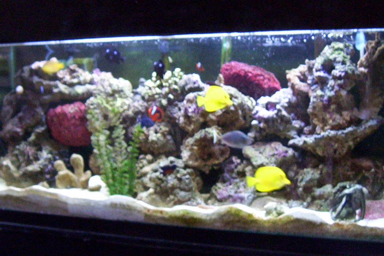 55 gallons reef tank (mostly live coral and fish) - It all started with a classified add on craigslist