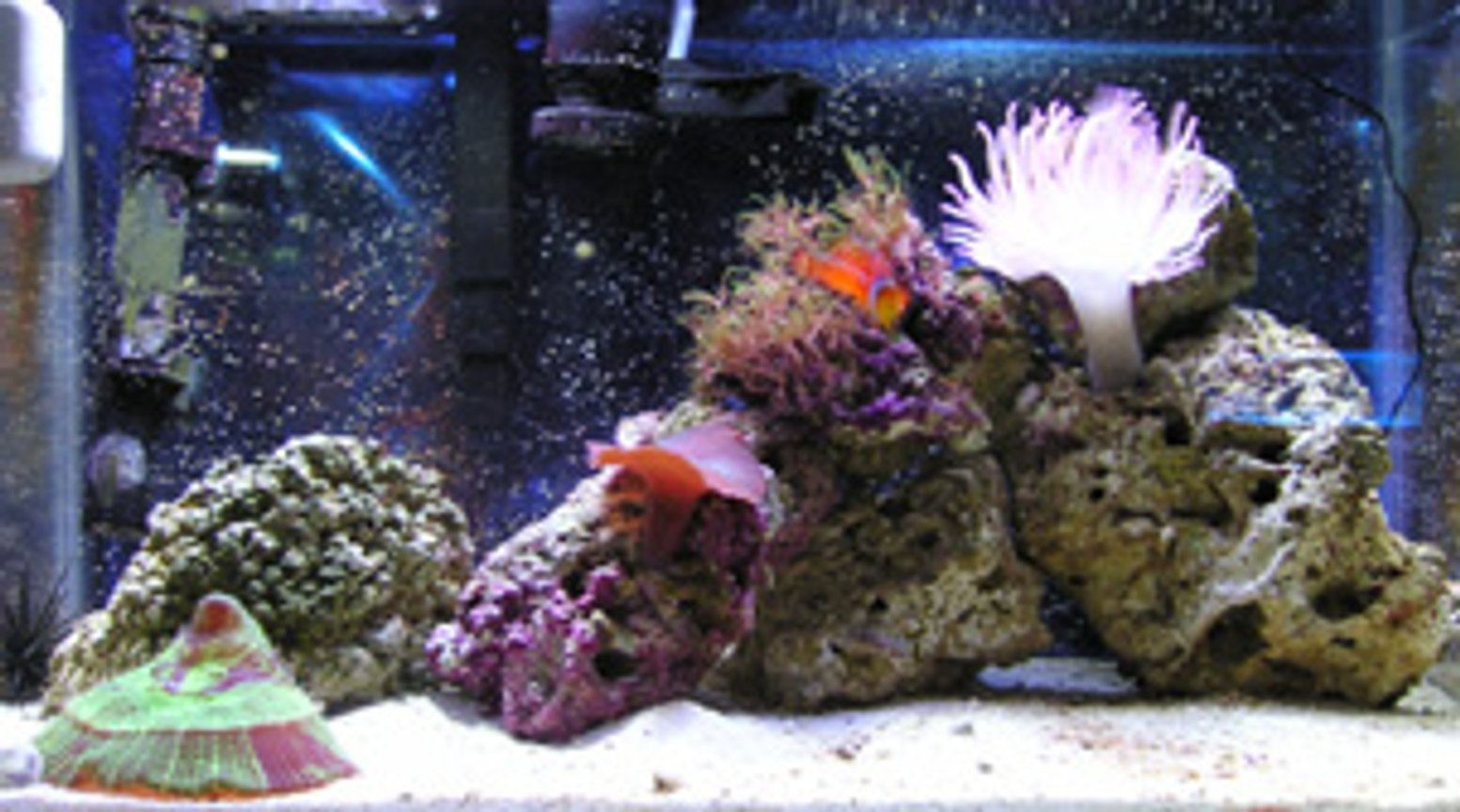 10 gallons reef tank (mostly live coral and fish) - Nov 24, 2005 9 months maturity