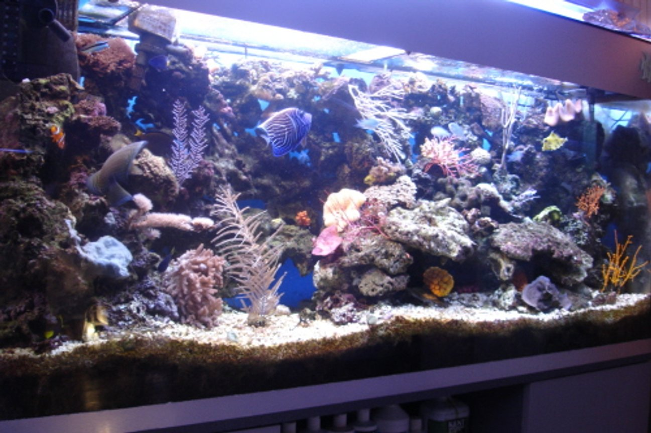 200 gallons reef tank (mostly live coral and fish) - PICTURE OF A COLOURFUL TANK WITH SOME OF THE HARDEST FISH AND CORALS TO KEEP ALIVE.