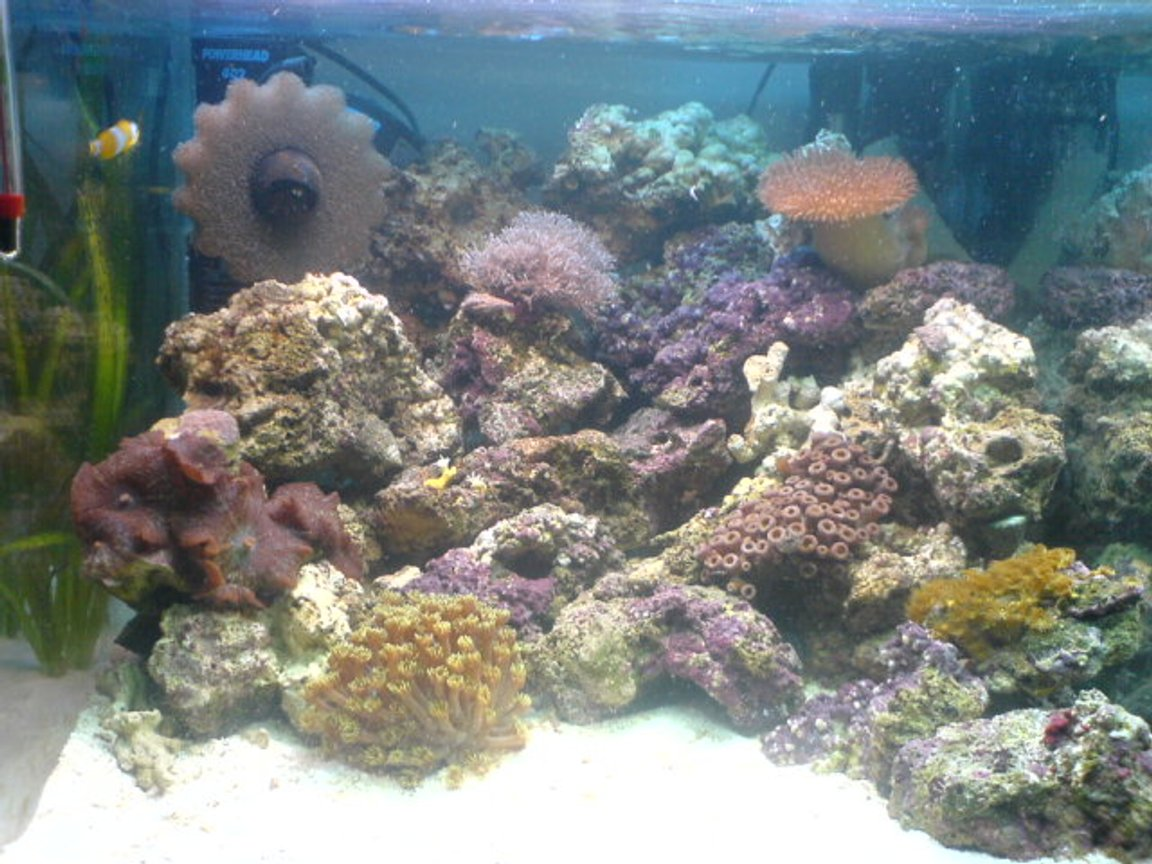 "12 gallons reef tank (mostly live coral and fish) - 18""x20""x16"" nano with live rock, 5 soft coral 1 hard coral, a clean up crew a clown and orchid dottyback, up and running a month so far"