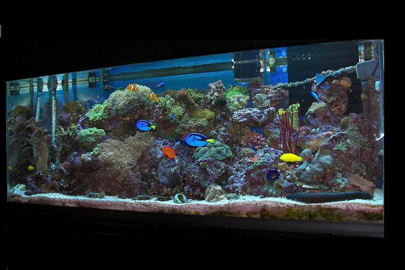 120 gallons reef tank (mostly live coral and fish) - my 120 reef 20+ fish, 17corals