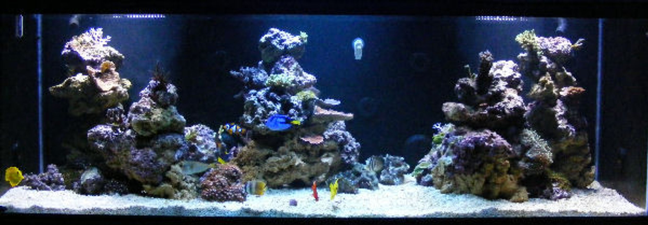 180 gallons reef tank (mostly live coral and fish) - 180g In-wall system