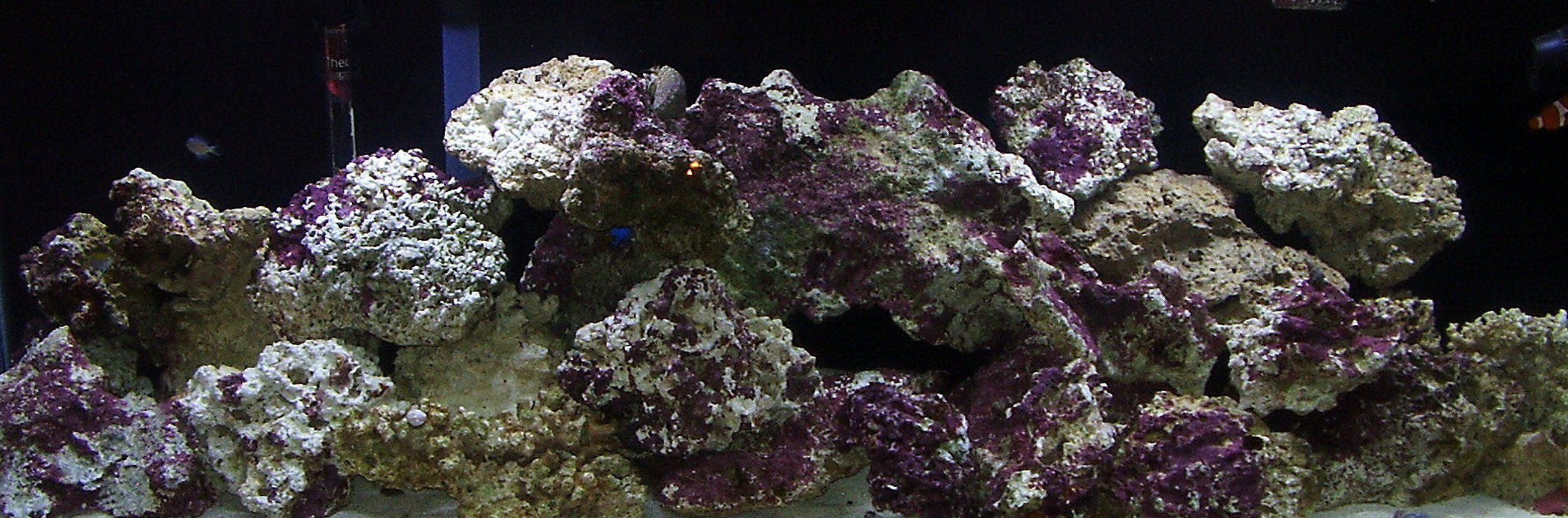 55 gallons reef tank (mostly live coral and fish) - Our new tank