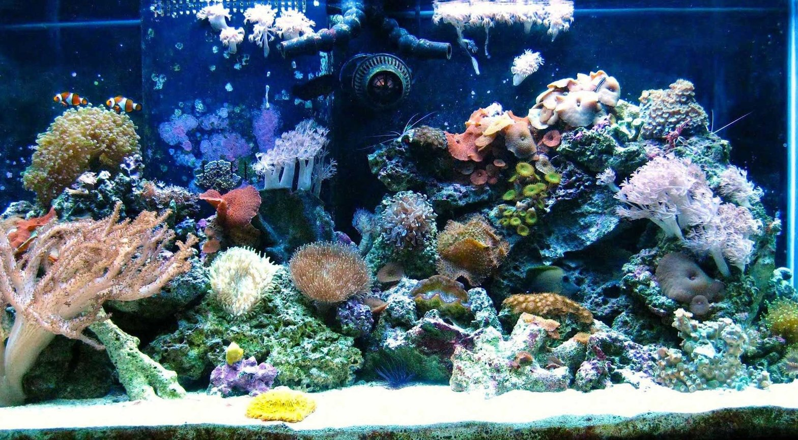 90 gallons reef tank (mostly live coral and fish) - 90 Gallons 2 False percula clowns, 2 Ferry wrasses, 1 Brown tang, 1 Angel beauty, 1 Neon gobby, 1 Banded coral, 1 Fire shrimp, 1 Peppermint shrimp 1 Cleaner shrimp, 1 Giant green brittle star Emerald crabs, turbo snails, sand snails Assortment of soft coral- -frog spawn, tube anenome, tree coral, button, zoanthus, pulsing xenias, green star polyps, grape coral, brain coral, Green bubble anenome, Clam, Mushrooms, Sponge, Feather dusters
