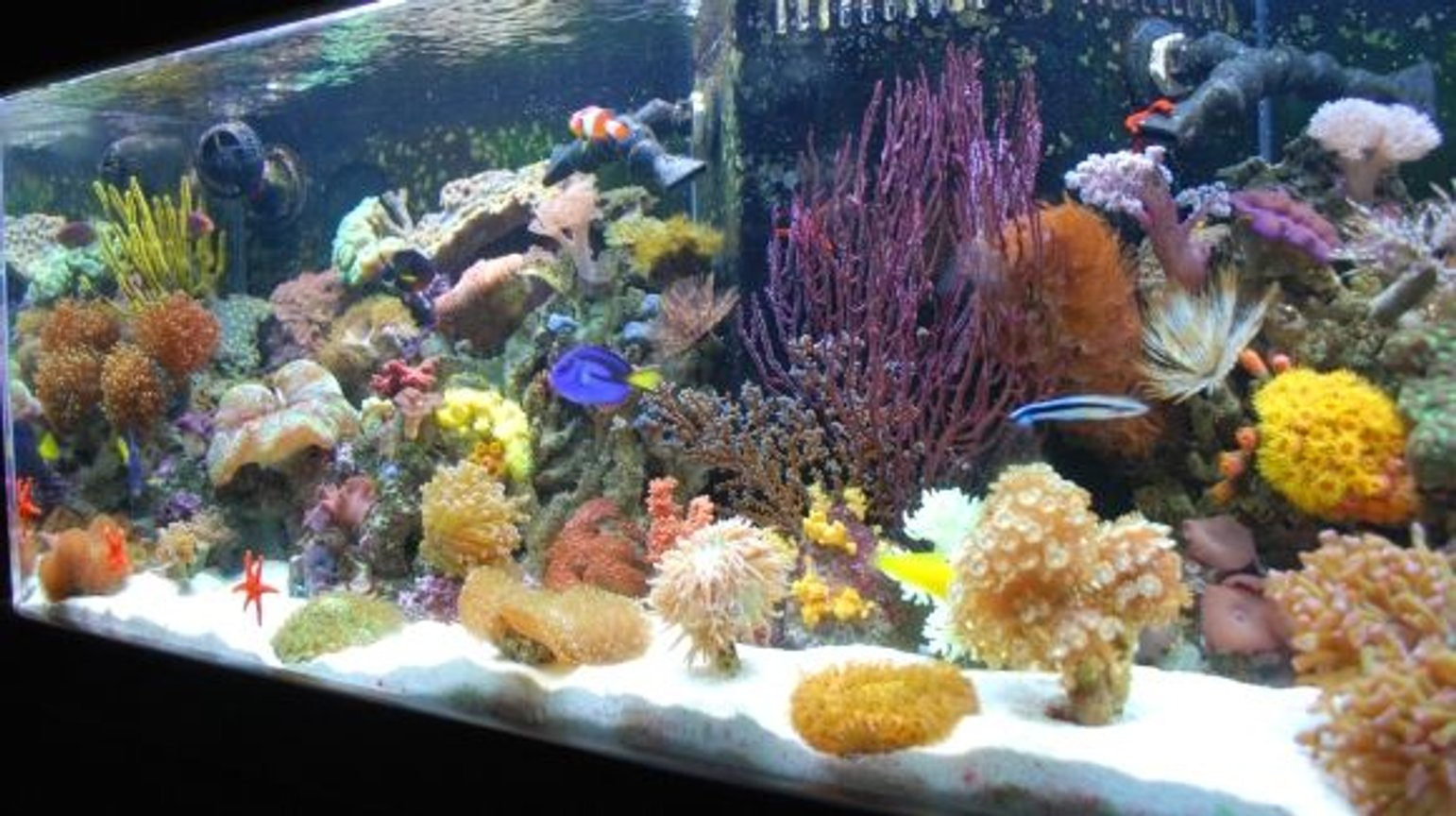 60 gallons reef tank (mostly live coral and fish) - Javier who has created this site has it rigged so you can't even vote on our pictures (Ryan - The Shepherds Reef Killer who built our tank has a tank posted which is NOT even his - we are done playing your third grade games) We are going to solicite the advertisers and make our own web site and do what we want on it so don't worry we'll be back ad # 1 again just like we were meant to be!!!!!!!!!!!!!!!!!!!!!!!!!!!!!!!!!!!!!) Every kind of fish you can think of that everyone says you can't keep together, we have in the tank --- Updated 7-24-08 - WE PURCHASED EVERYTHING IN OUR TANK FROM JEFF'S EXOTIC FISH IN COSTA MESA (714) 540-0880 THEY ARE VERY KNOWLEDGABLE AND CAN GET YOU STARTED EVEN IF YOU JUST WANT A LITTLE NANO TANK. THANKS GUYS!!!!
