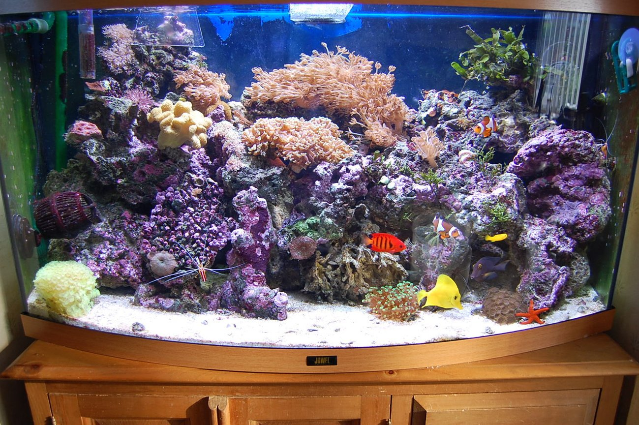40 gallons reef tank (mostly live coral and fish) - Jewel Vision 180 Bow Fronted. 3ft wide by 16 inches deep & 22 inches high. 1 external Eheim professional filter with activated carbon & rowaphos in it. x2 Hydor powerheads, 45Kg Live rock, Live sand as substrate. Deltec MCE300 Protein Skimmer. TMC UV sterilizer, Eco Aqualizer, 200W heater, Aquamedic 150W metal Halide lighting unit suspended over my tank & 2 strips of blue LED lights attached to my aquamedic unit as my actinics night viewing.Certizon ozonizer connect to an ORP controller