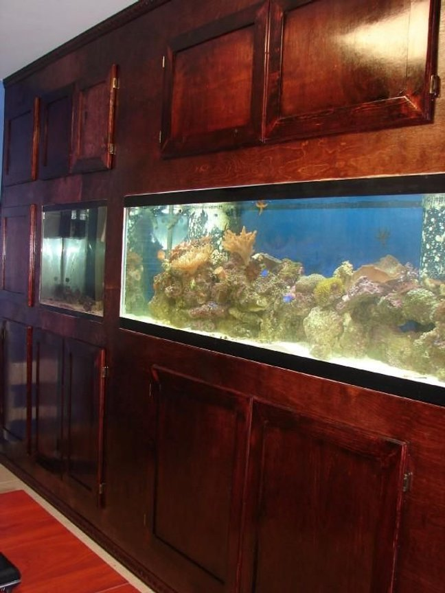 125 gallons reef tank (mostly live coral and fish) - Home office 125 Gallon Reef tank.