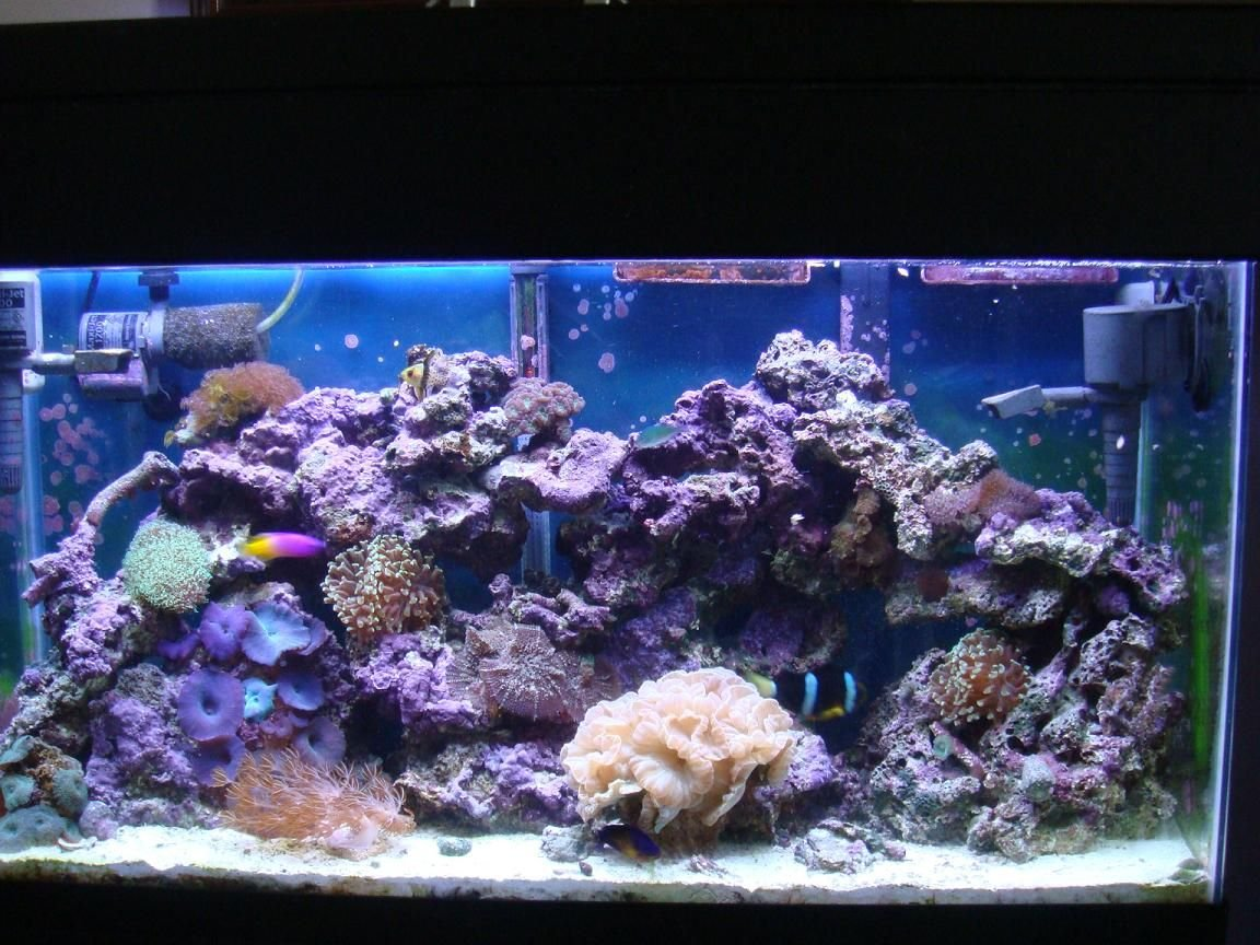 35 gallons reef tank (mostly live coral and fish) - coral and fish, 35 gal. feeding time