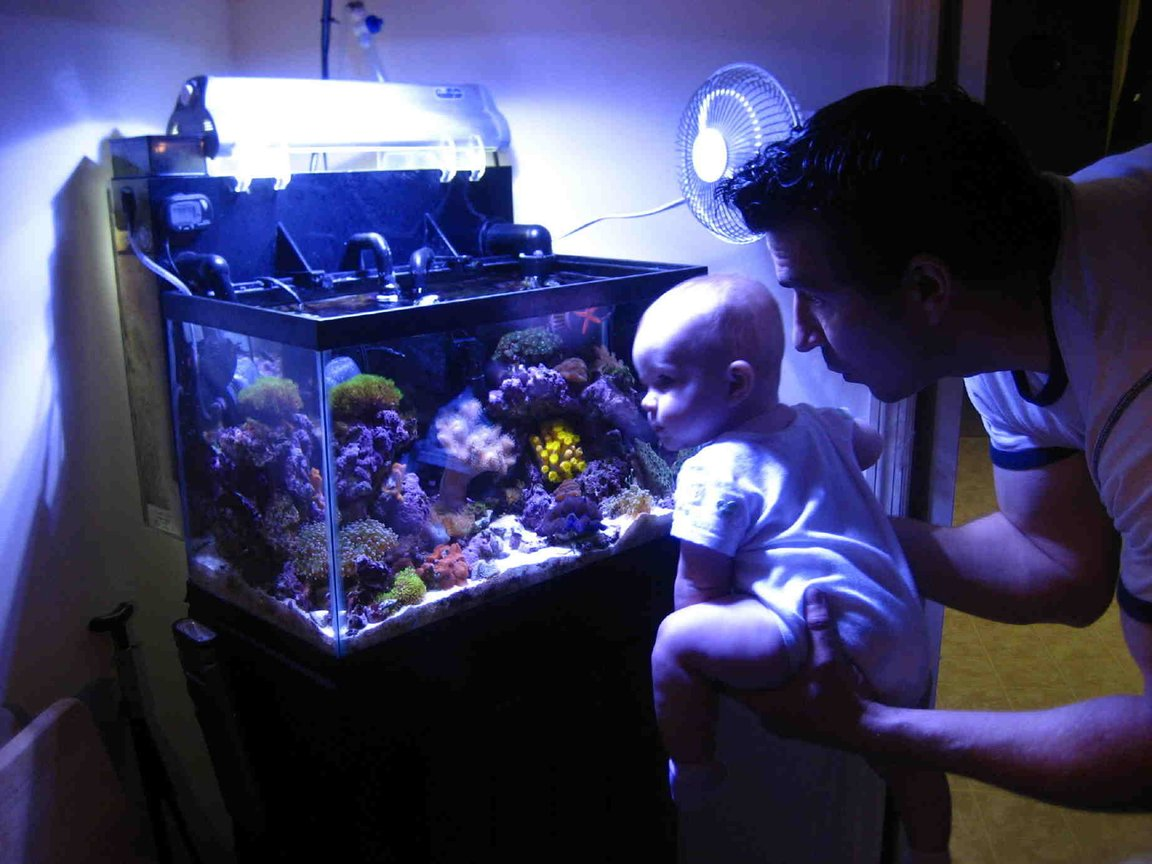 75 gallons reef tank (mostly live coral and fish) - Future aquarist?..or..Whatever dad.