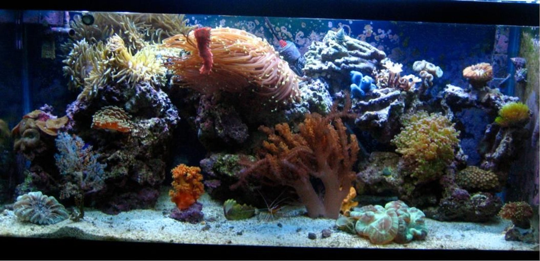 30 gallons reef tank (mostly live coral and fish) - This is my 30 G tank almost one year into it.