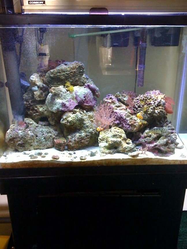 37 gallons reef tank (mostly live coral and fish) - Just my 37 Gallon, im new at this folks..!! A poor mans setup.... :(
