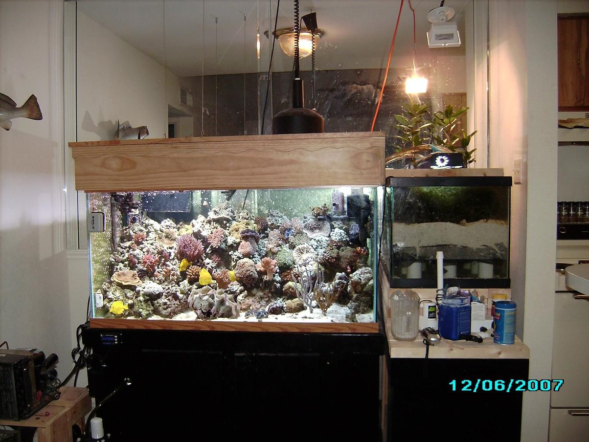 120 gallons reef tank (mostly live coral and fish) - 1
