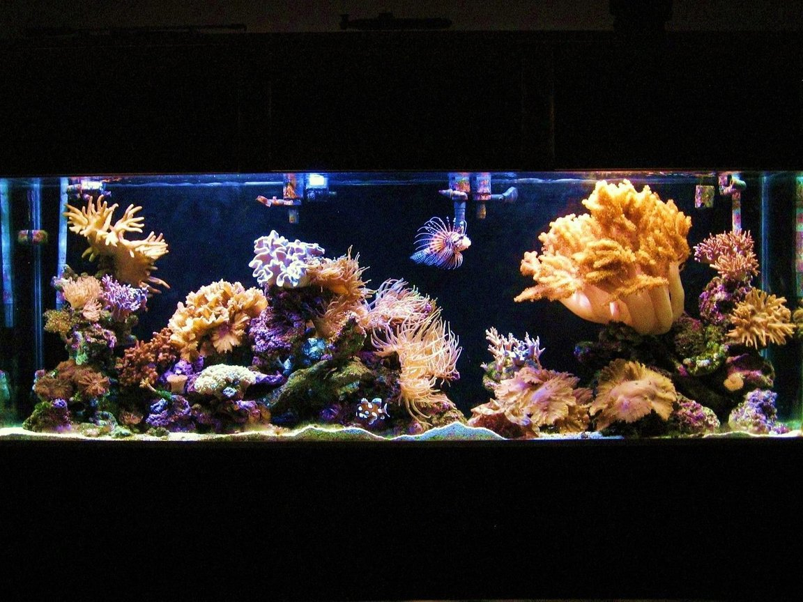 150 gallons reef tank (mostly live coral and fish) - my 150 gallon