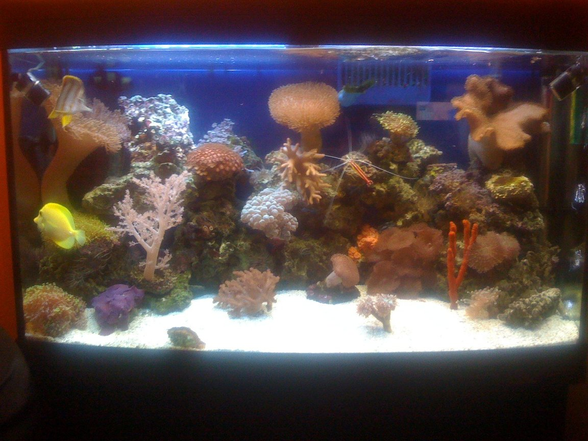 45 gallons reef tank (mostly live coral and fish) - New Coral