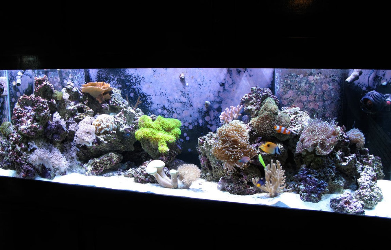 125 gallons reef tank (mostly live coral and fish) - My reef tank after 9 months