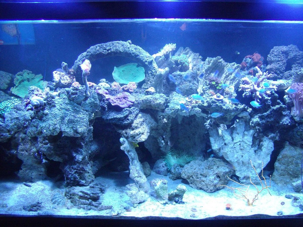 220 gallons reef tank (mostly live coral and fish) - My 220