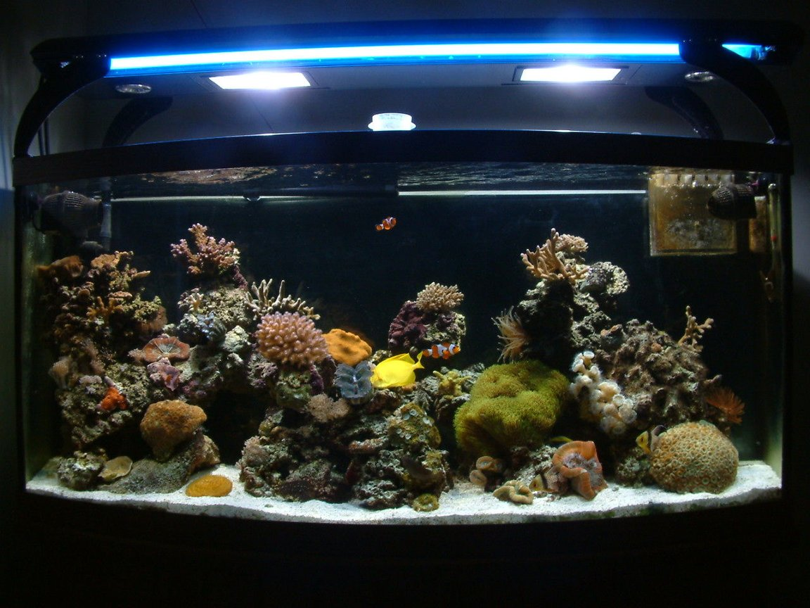 72 gallons reef tank (mostly live coral and fish) - Front Tank Shot
