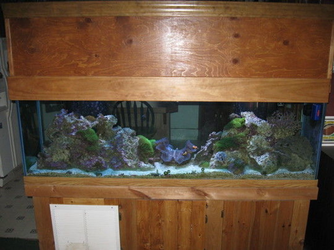 125 gallons reef tank (mostly live coral and fish) - this is my 125 gallon reef tank. hope you like it.