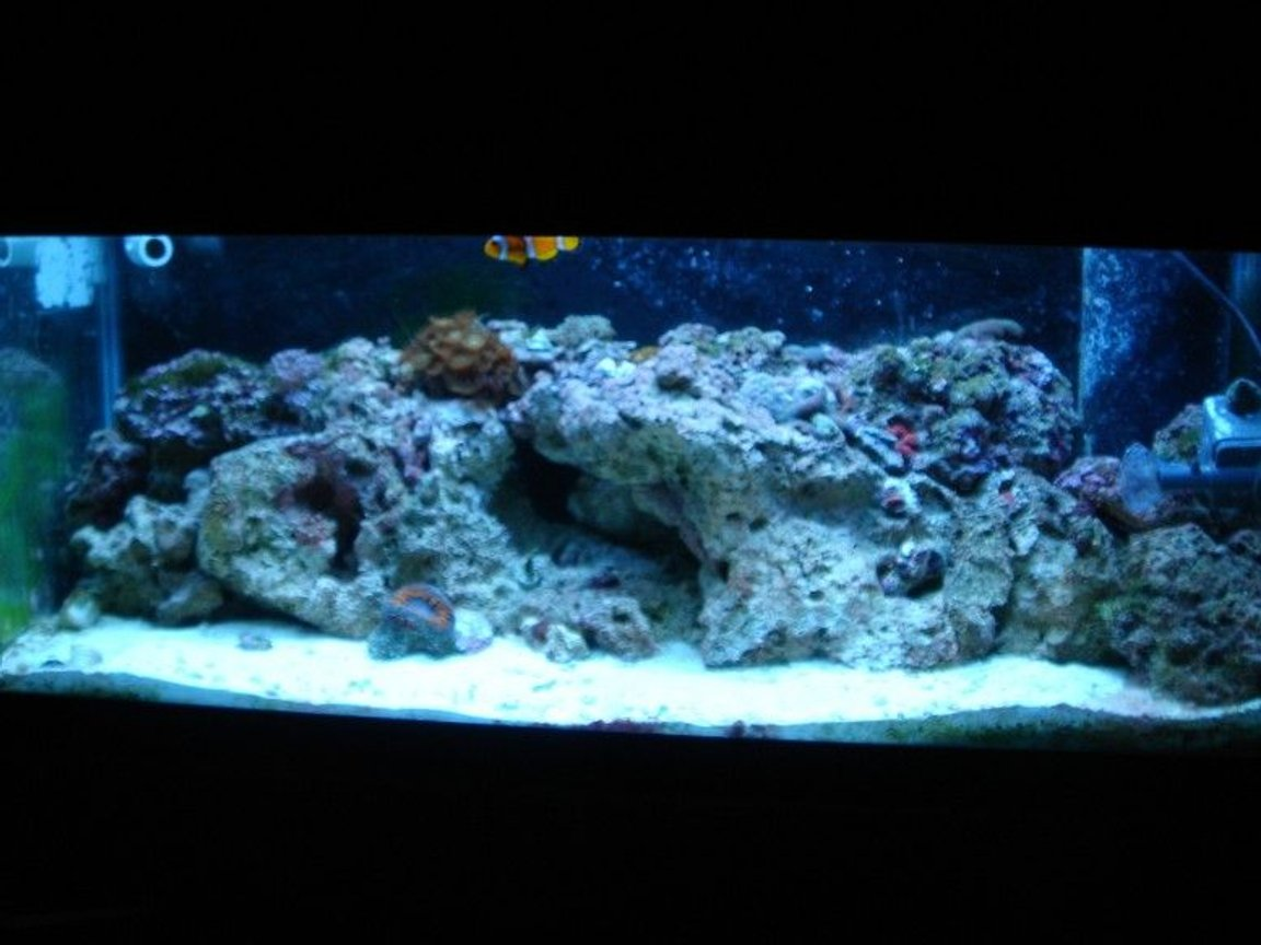 20 gallons reef tank (mostly live coral and fish) - FRONT