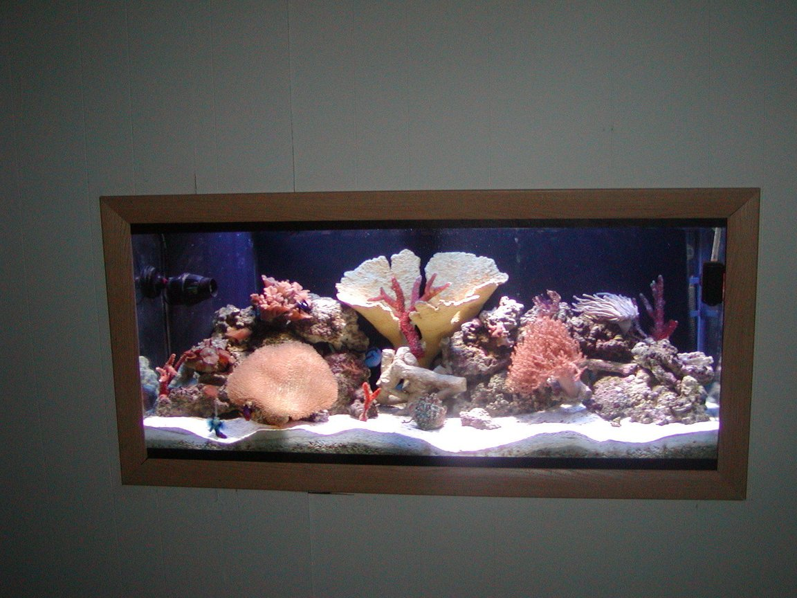75 gallons reef tank (mostly live coral and fish) - in wall picture