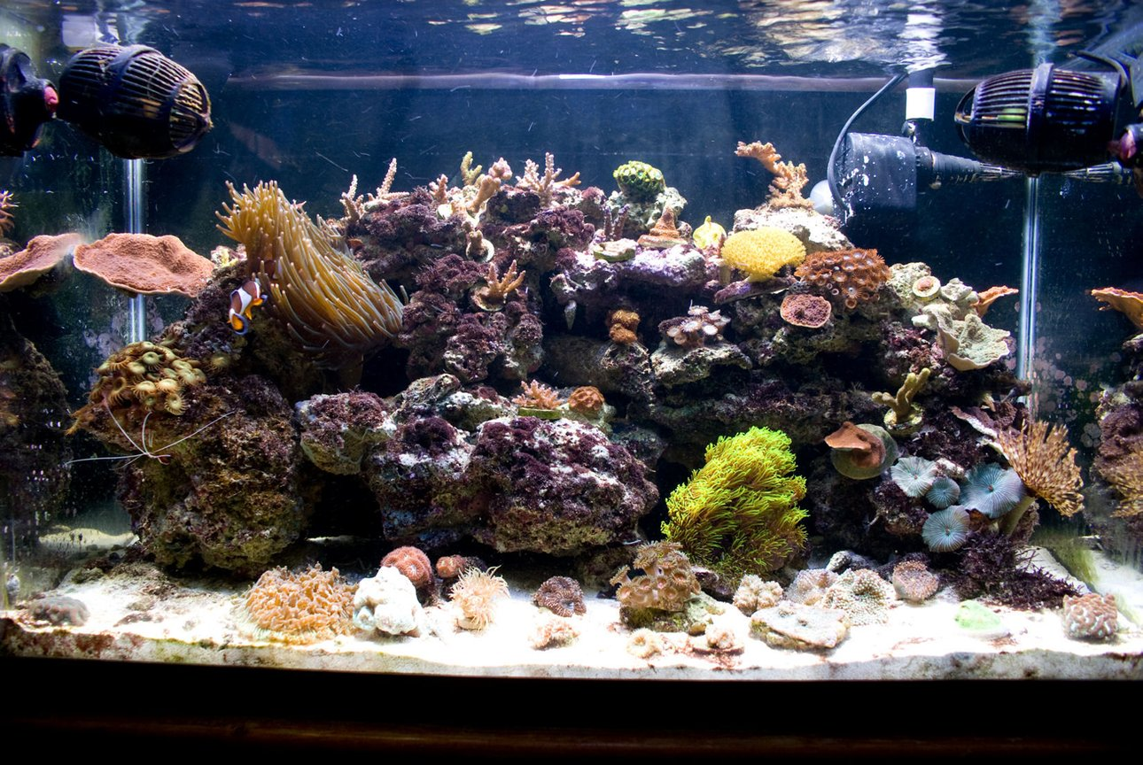29 gallons reef tank (mostly live coral and fish) - My 29g nano reef tank. Set up in June of '08.