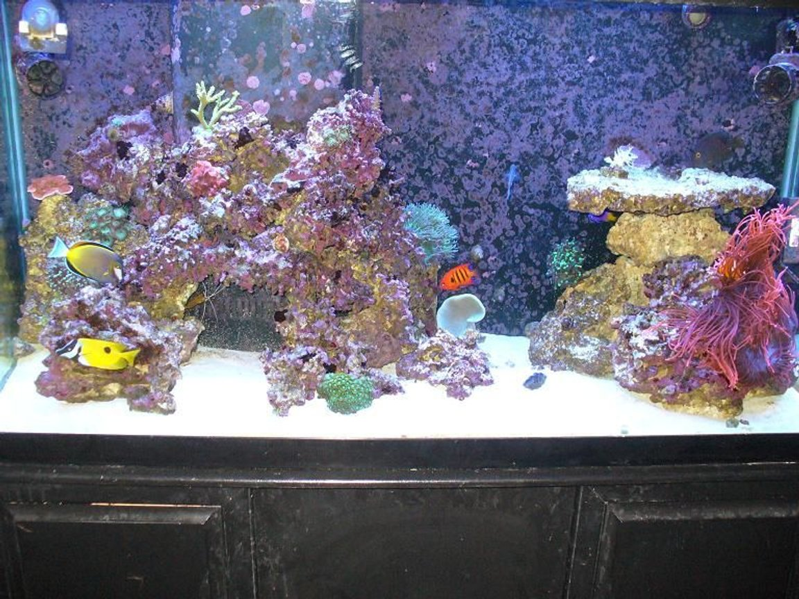 90 gallons reef tank (mostly live coral and fish) - tank after 1 year about 15 corals and 8 fish.