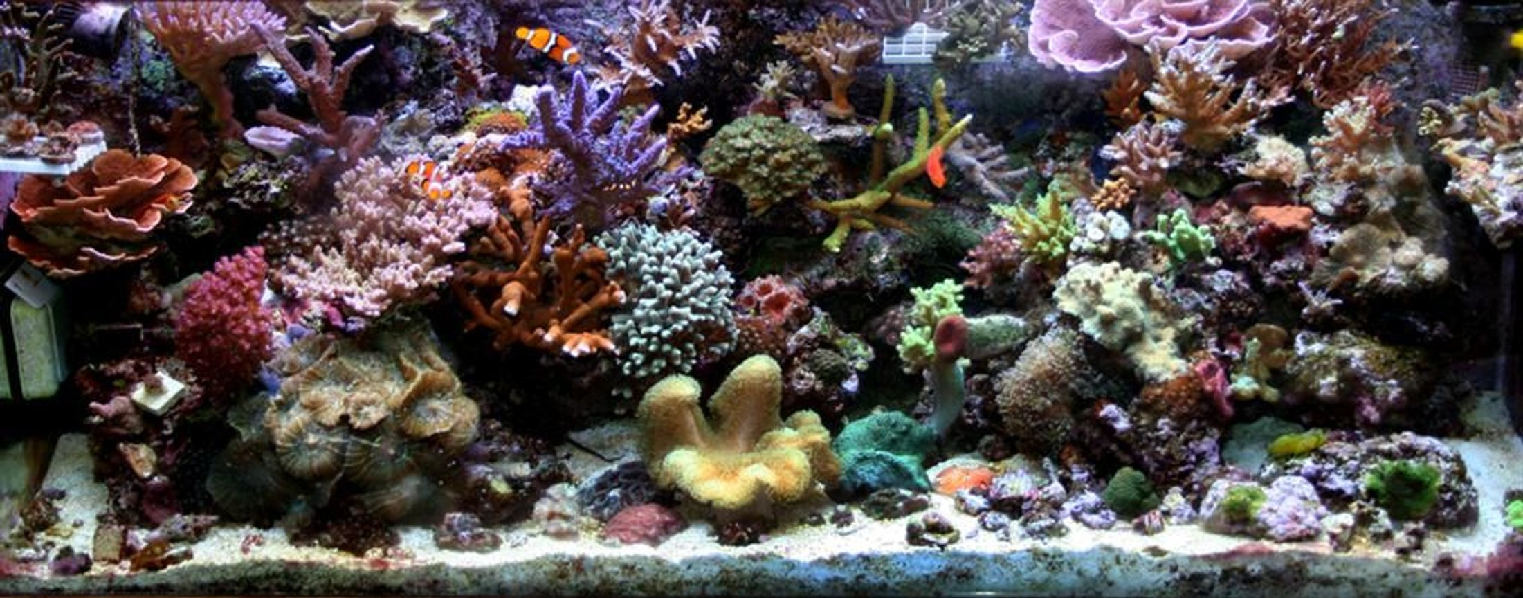 210 gallons reef tank (mostly live coral and fish) - Full tank shot of 75gal tank. may 08