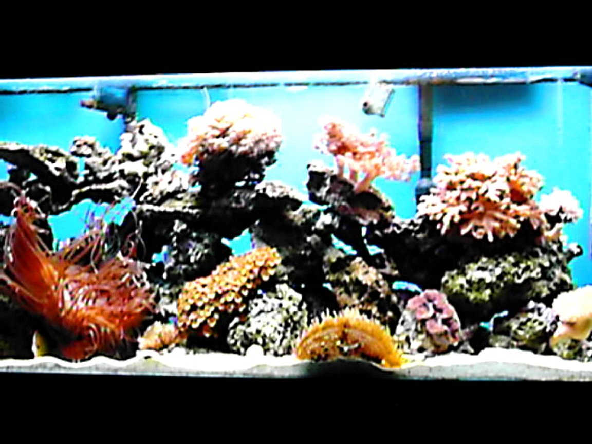 65 gallons reef tank (mostly live coral and fish) - almost full view of my 65 gallon but poor resilution