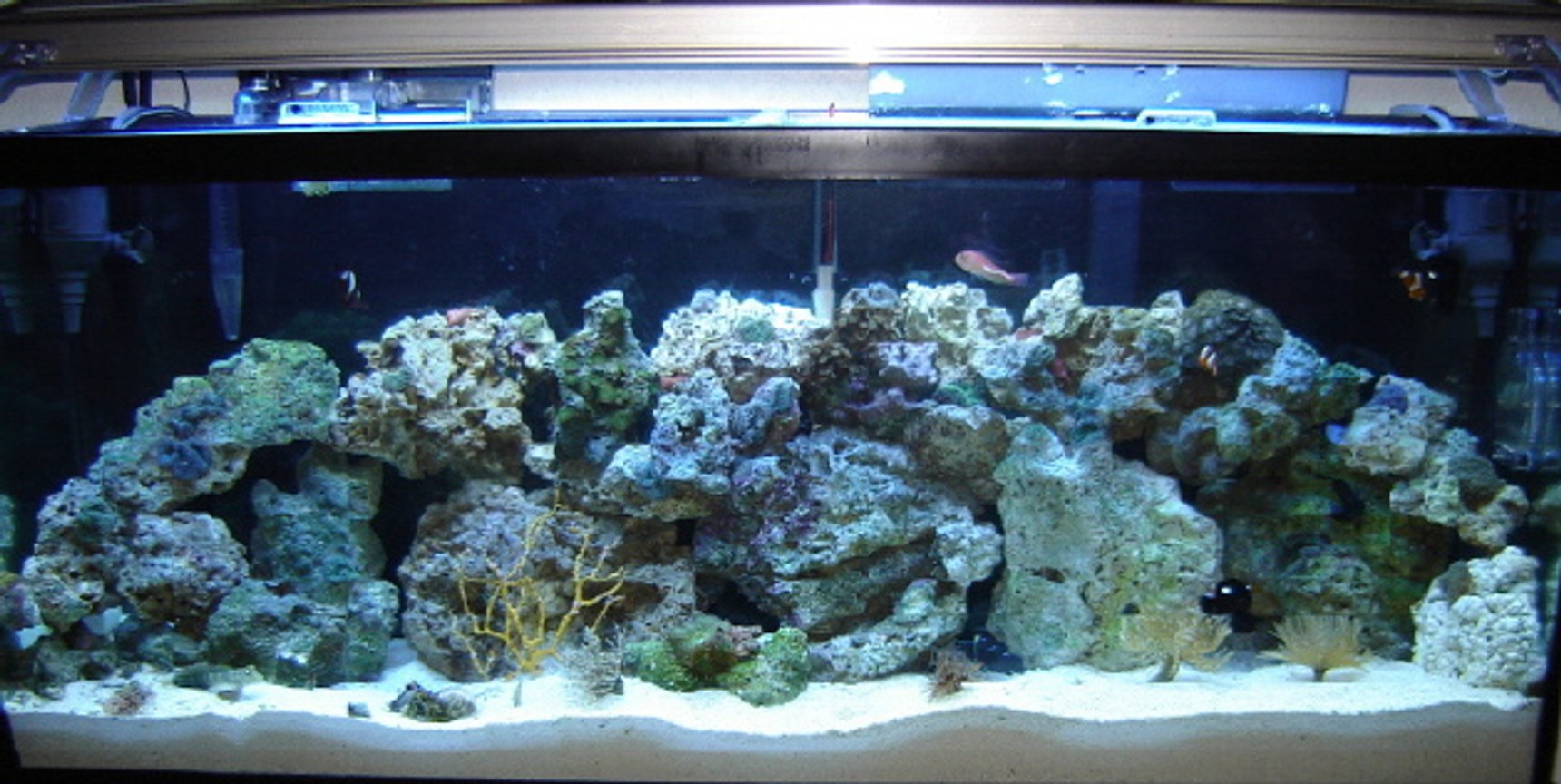 55 gallons reef tank (mostly live coral and fish) - 55 gallon saltwater with coral and fish.