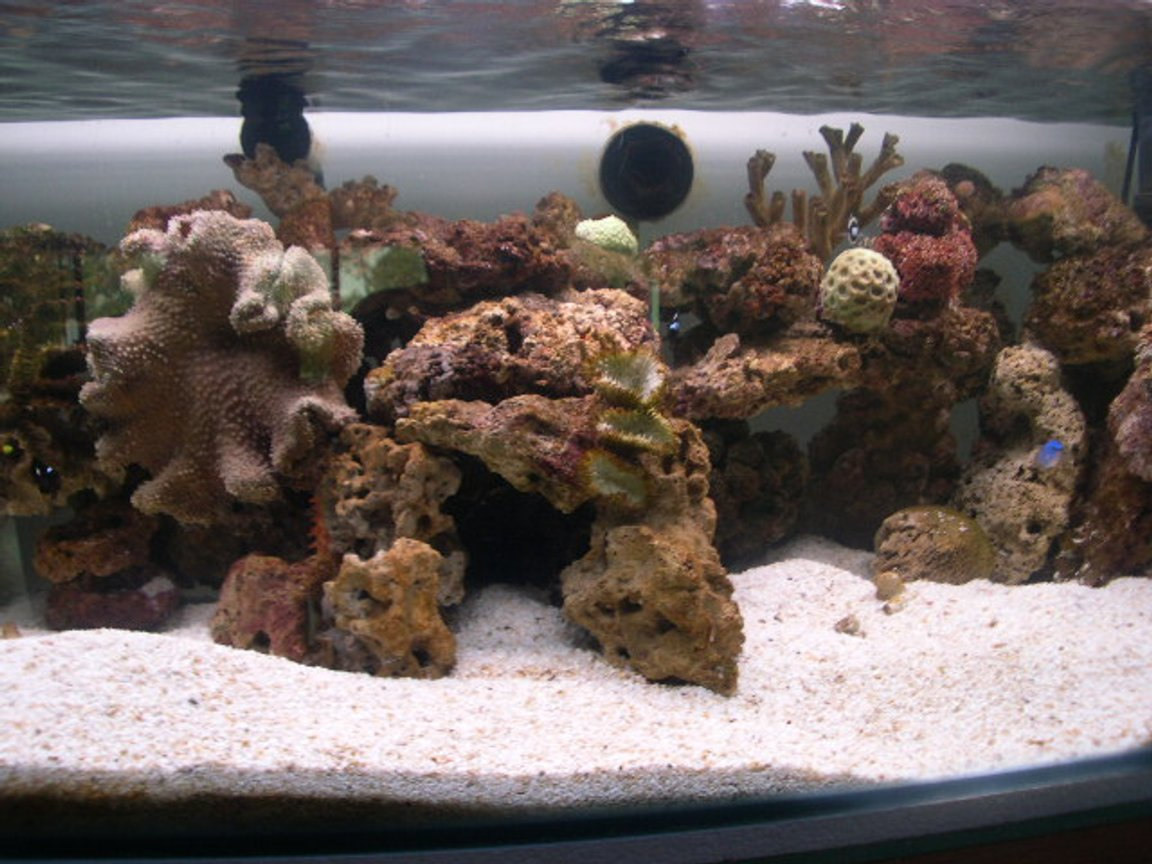 80 gallons reef tank (mostly live coral and fish) - Favourite old photo, need to update already