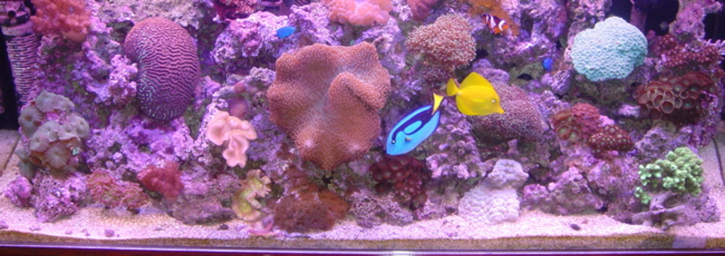 60 gallons reef tank (mostly live coral and fish) - Ratings of less than 7 will not be accepted