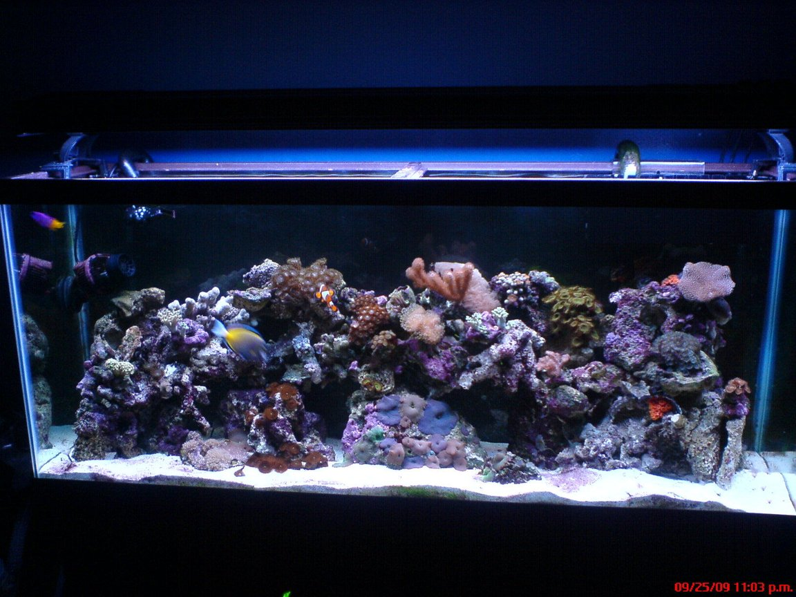 55 gallons reef tank (mostly live coral and fish) - 55 gallon reef tank