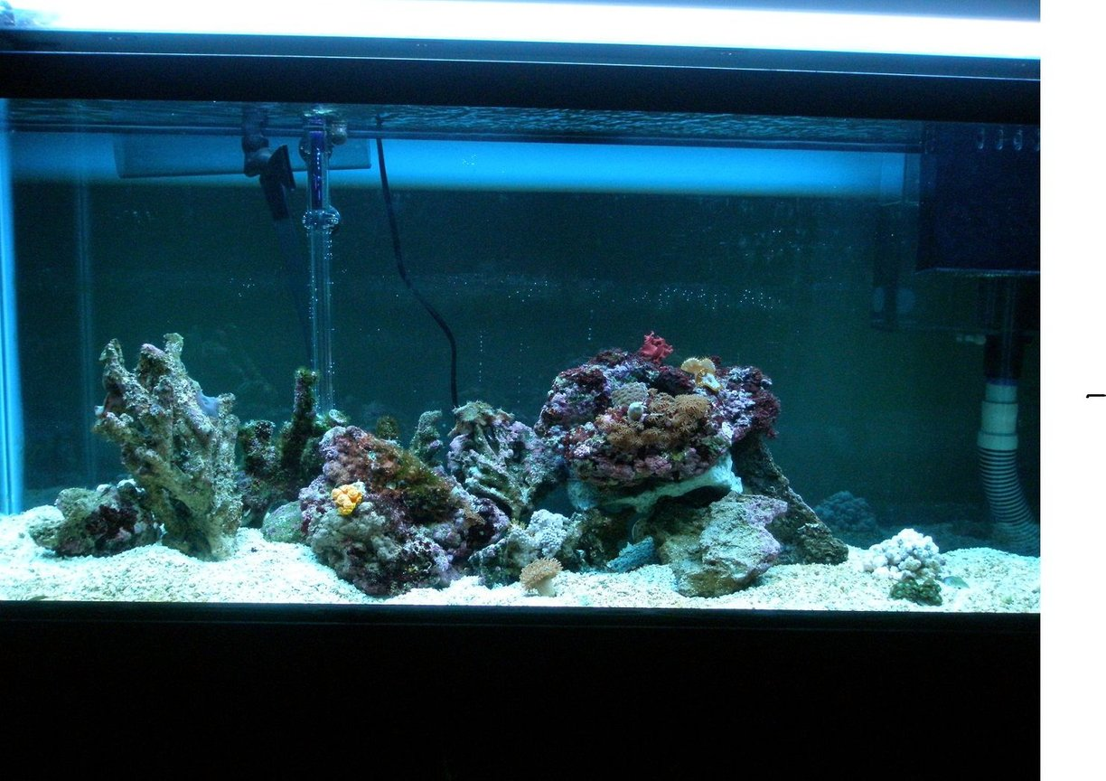 55 gallons reef tank (mostly live coral and fish) - this is my new tank its gonna be fun