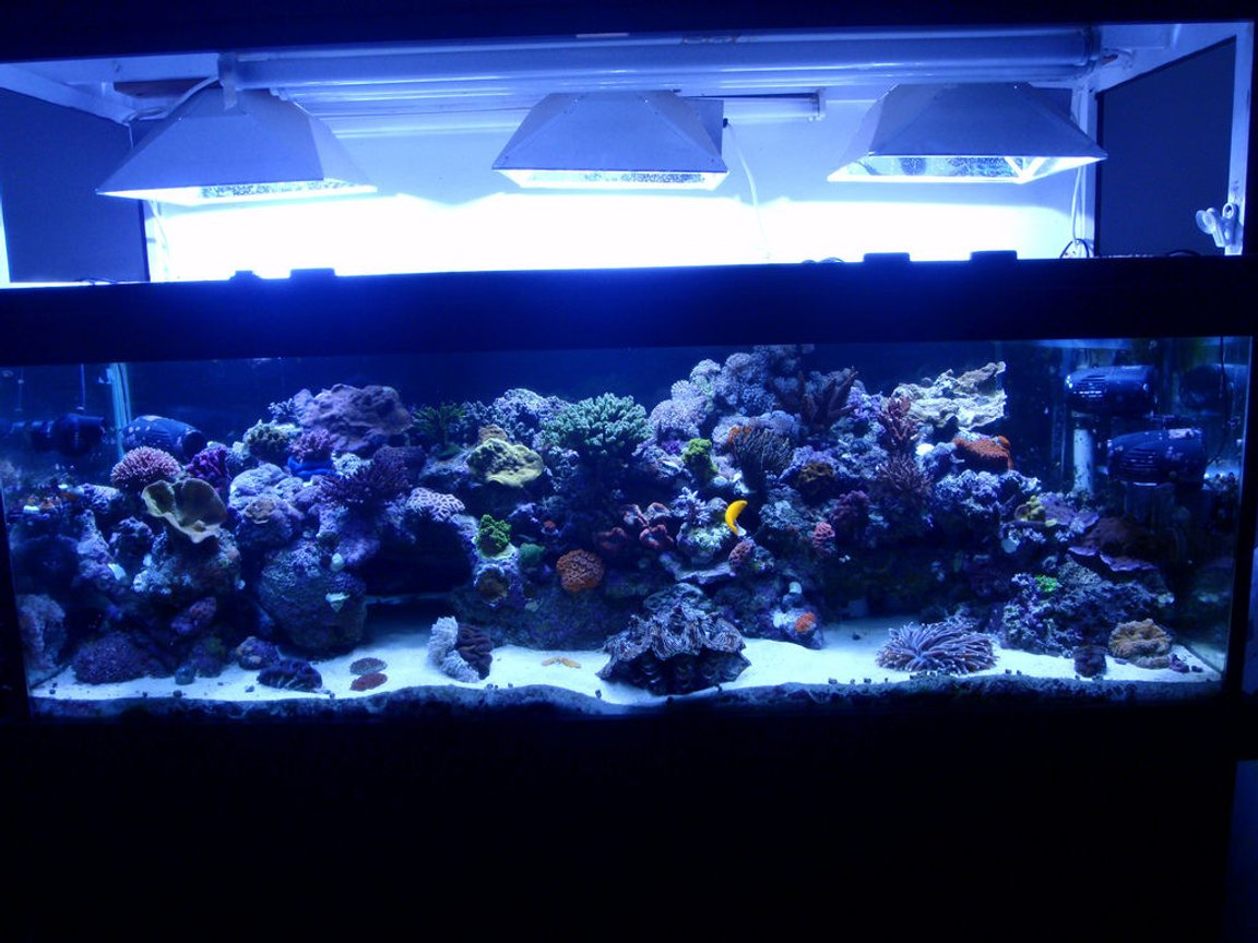 200 gallons reef tank (mostly live coral and fish) - Not a great photo. Only FTS I have on this machine.