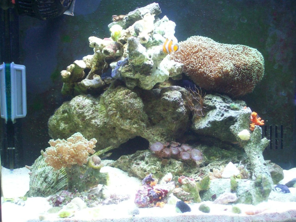 14 gallons reef tank (mostly live coral and fish) - bio-cube