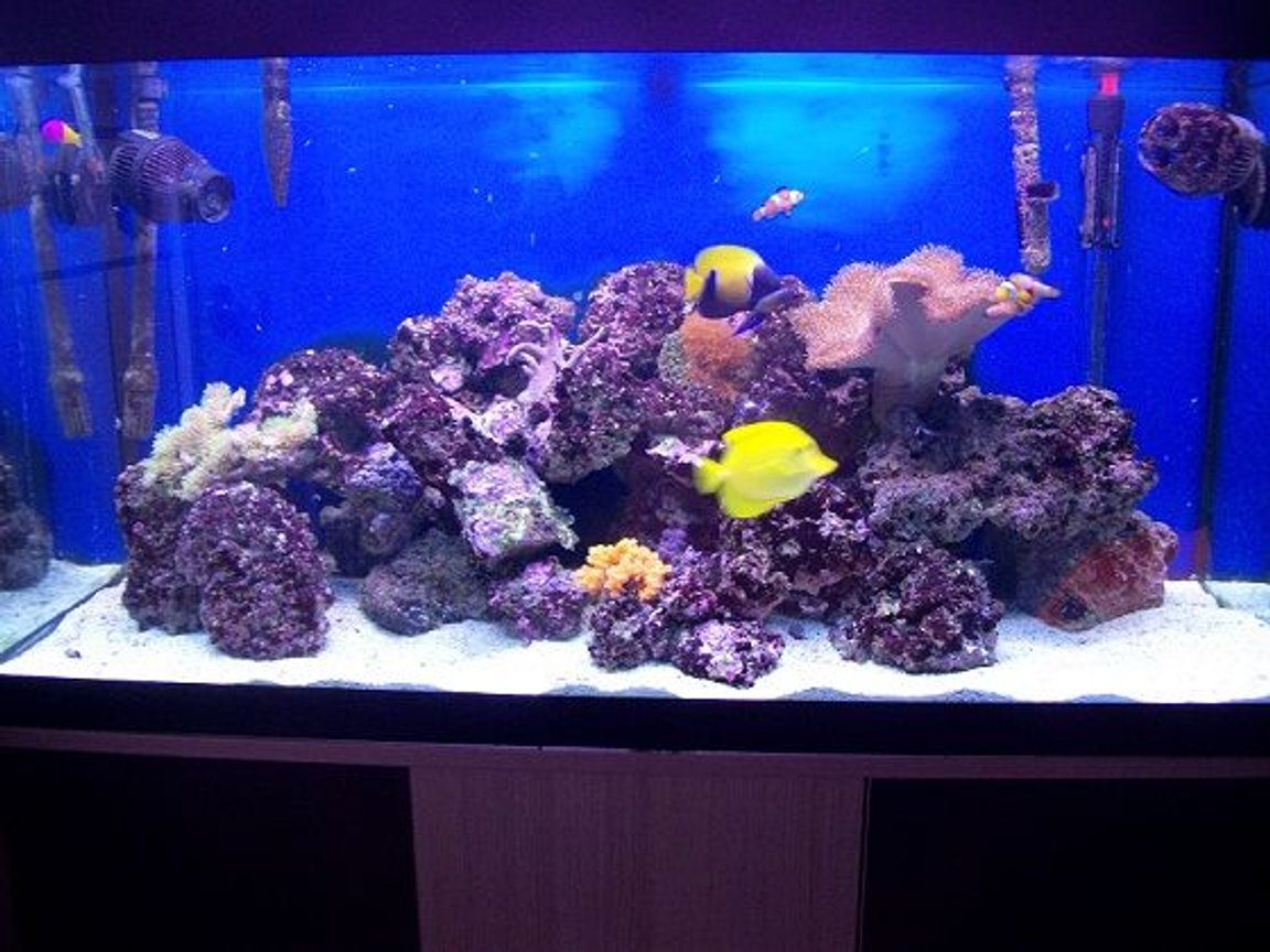 44 gallons reef tank (mostly live coral and fish) - My Tank!