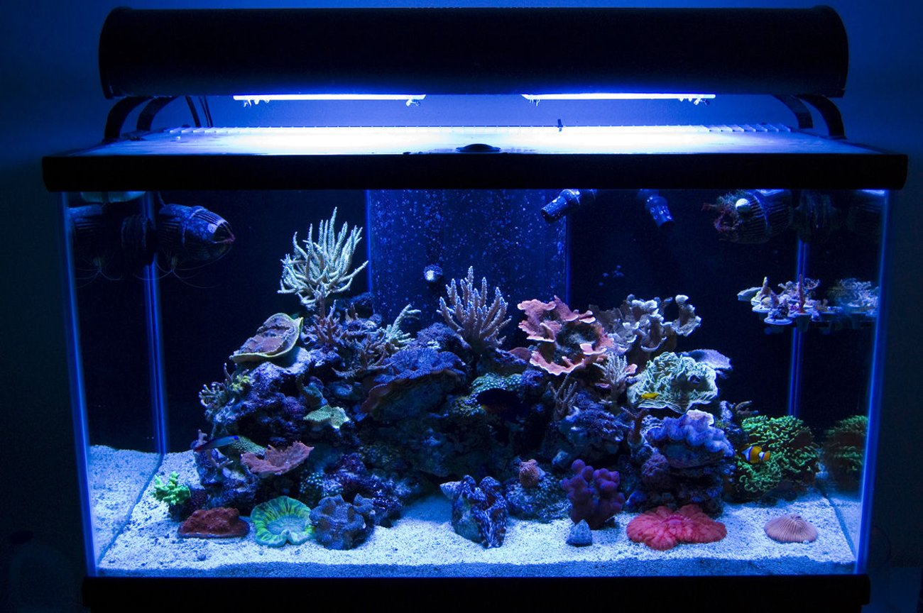 58 gallons reef tank (mostly live coral and fish) - new tank, new equipment, its all new. pic taken 3-4-10.