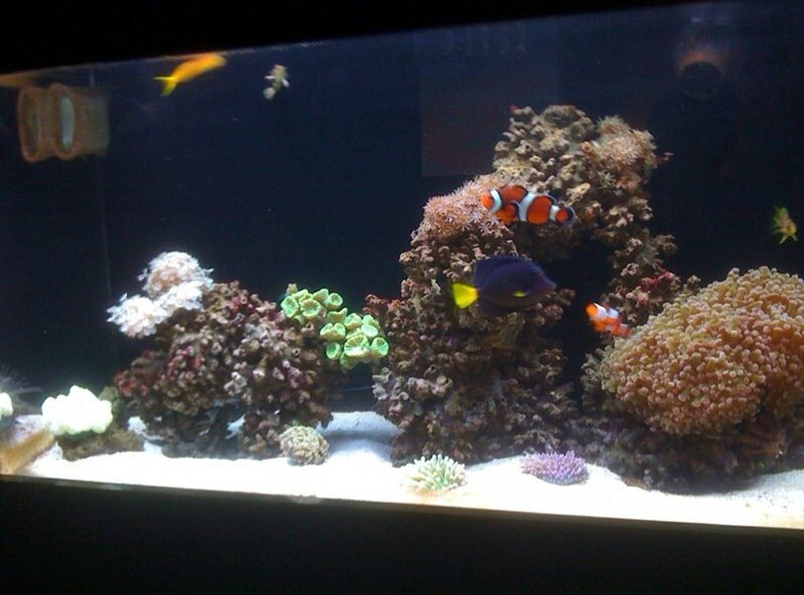 50 gallons reef tank (mostly live coral and fish) - My Reef Fish Tank
