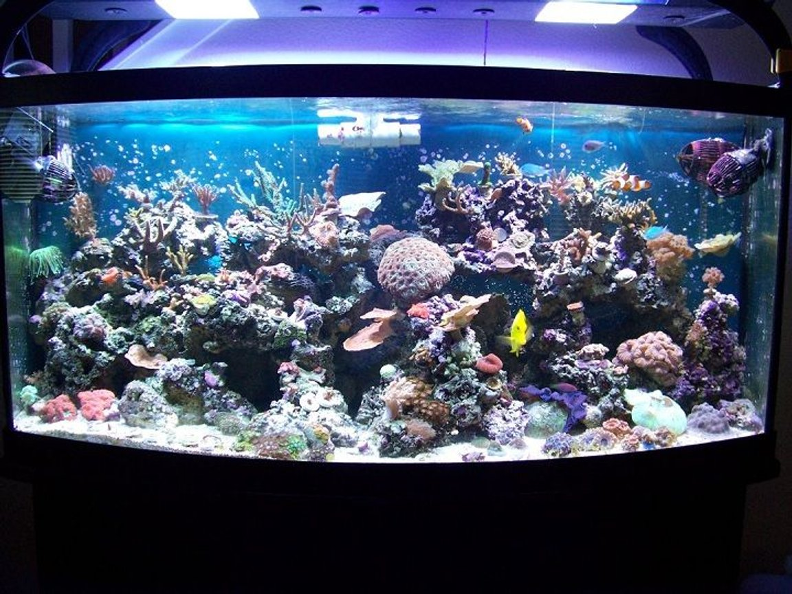 180 gallons reef tank (mostly live coral and fish) - 72g