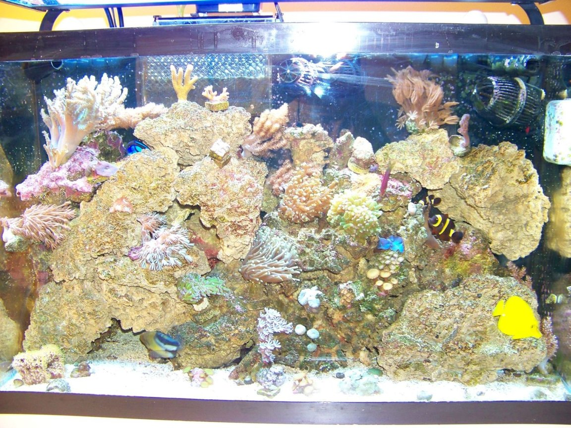 29 gallons reef tank (mostly live coral and fish) - My 29G Tank