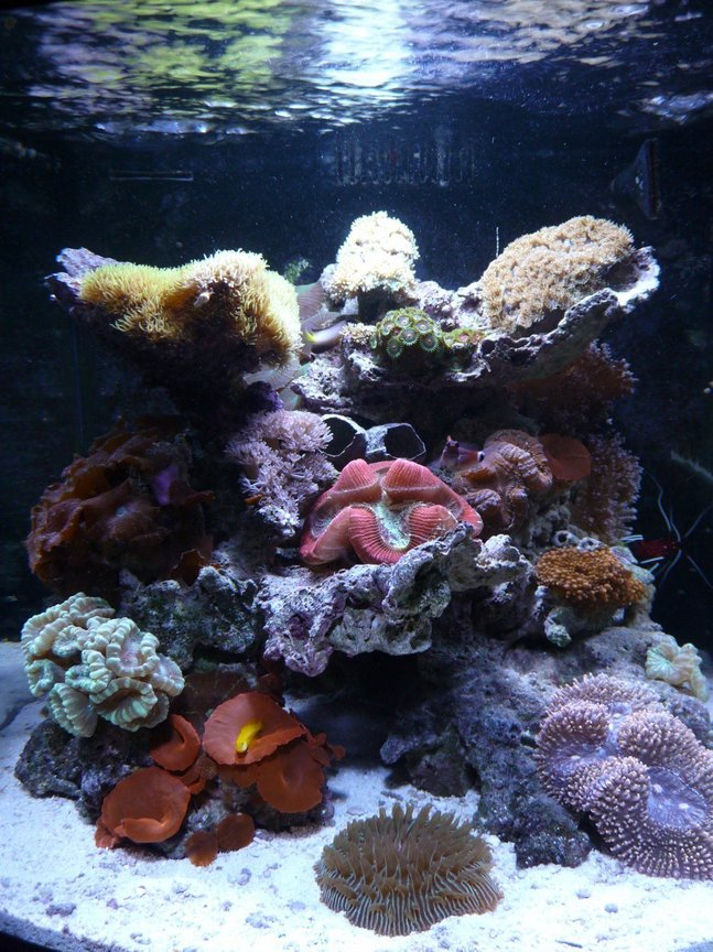 28 gallons reef tank (mostly live coral and fish) - 28 gal. JBJ Nano Reef