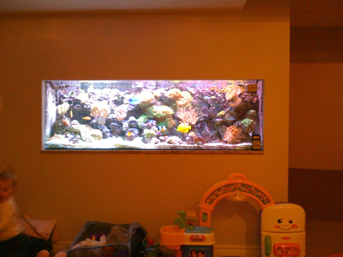 75 gallons reef tank (mostly live coral and fish) - 180 gallon