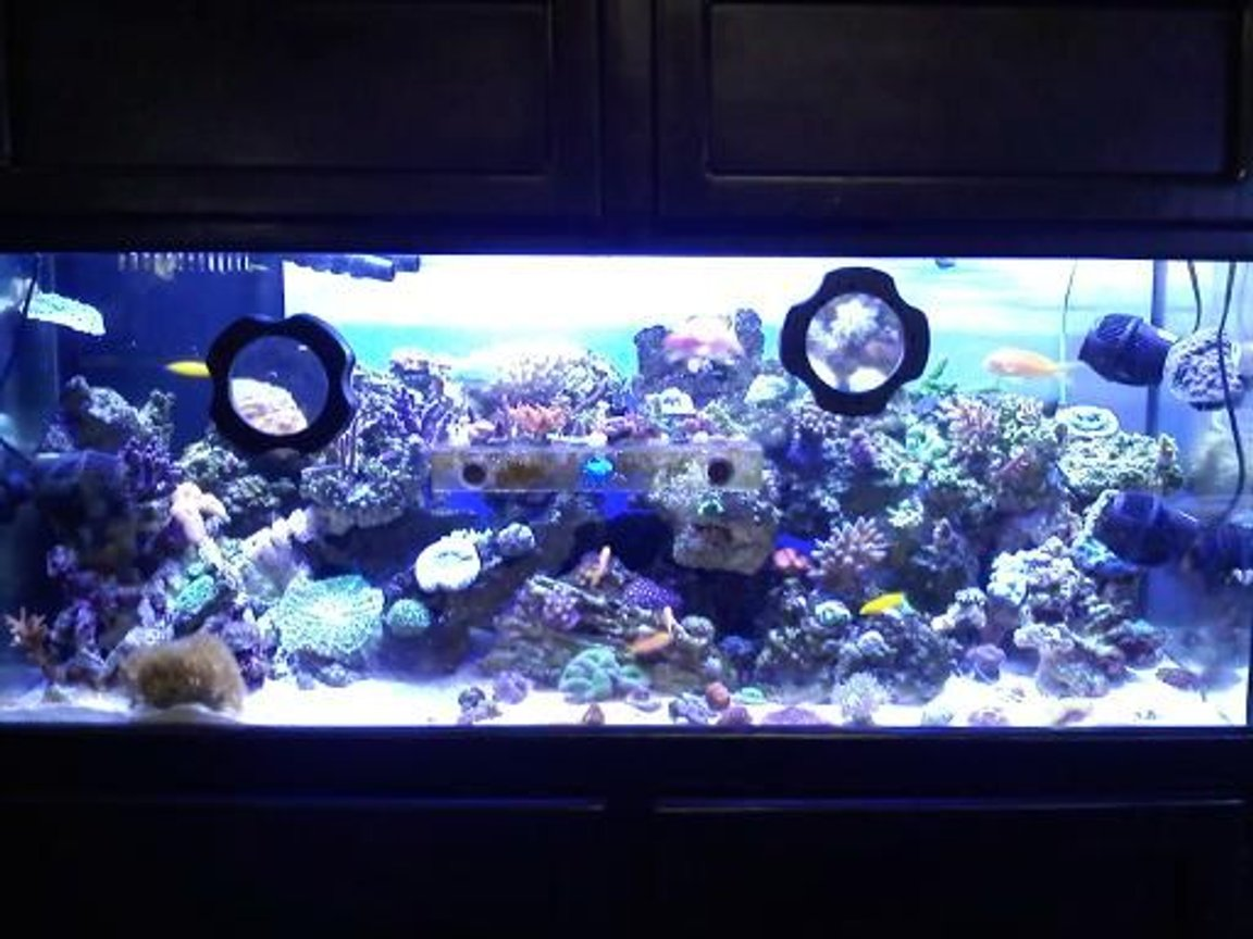 75 gallons reef tank (mostly live coral and fish) - my baby