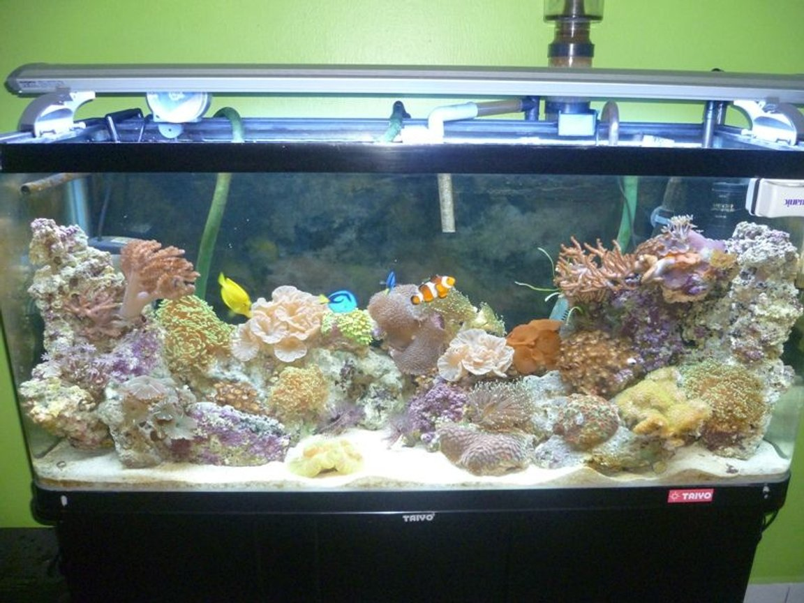 57 gallons reef tank (mostly live coral and fish) - New Upload: 08/03/2011 Tank size: 4L, 1.25W, 1.5H Using Canister pam, T5 light, protein skimmer, surface skimmer and resum chiller. Currently this tank was fresh water fish, but now i change it to marine and have to reused what existing equipment. Canister not really suitable for marine. But here u can see cheep things also worth for the good one.