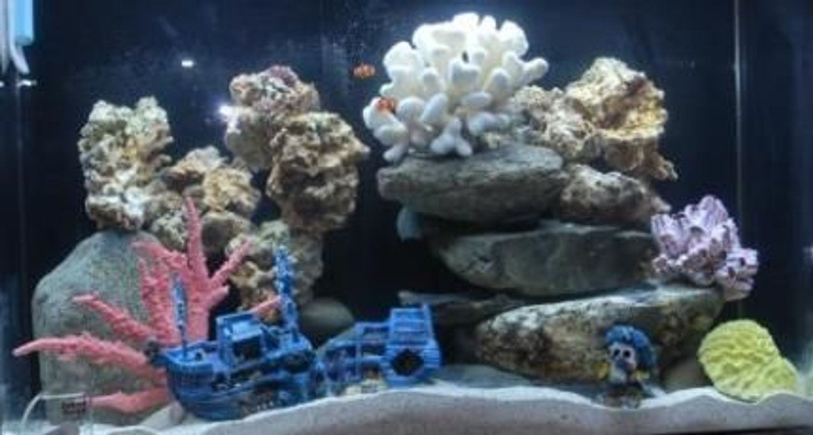 125 gallons reef tank (mostly live coral and fish) - my tank at 5 weeks