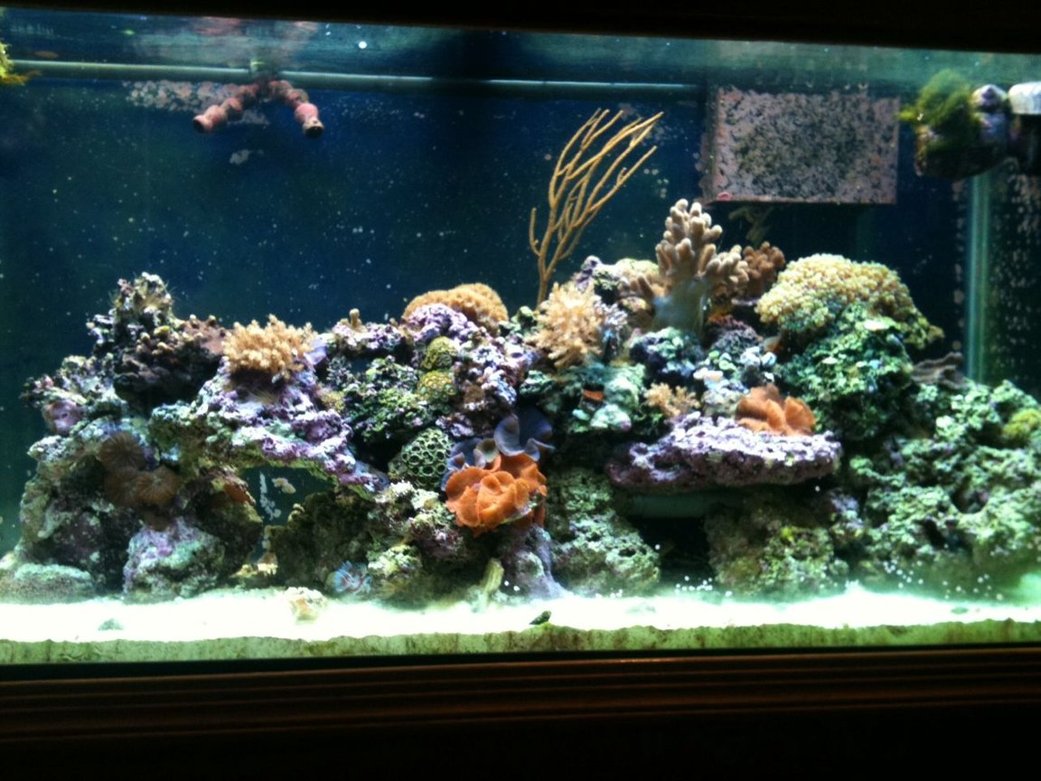 90 gallons reef tank (mostly live coral and fish) - 90 gallon reef