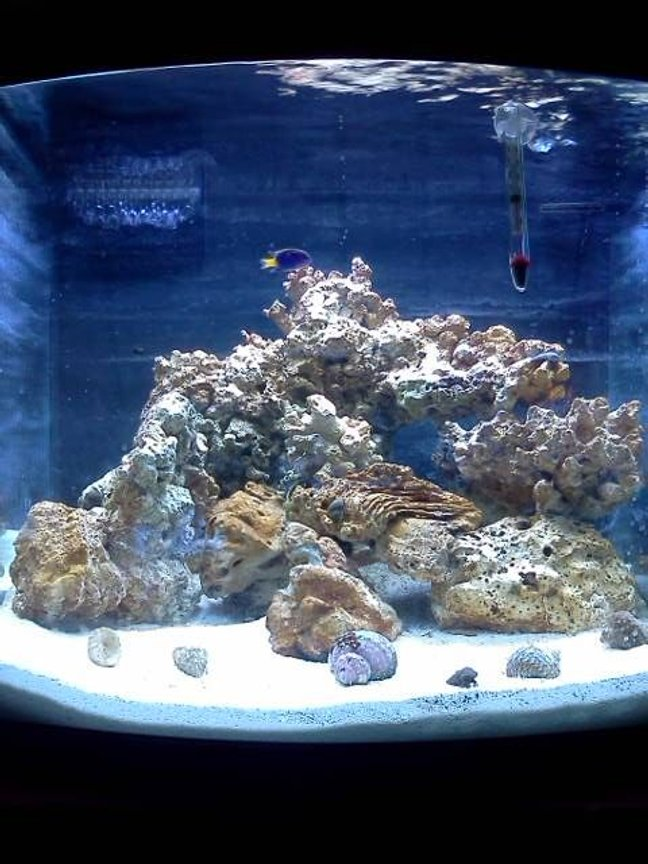 24 gallons reef tank (mostly live coral and fish) - New cycling tank as of 06/15/2011 it is 6 weeks old