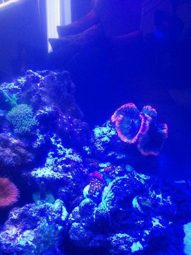 60 gallons reef tank (mostly live coral and fish) - My new saltwater reef tank 24 24 24 cube tank. Its been running two months now and I'm loving it.