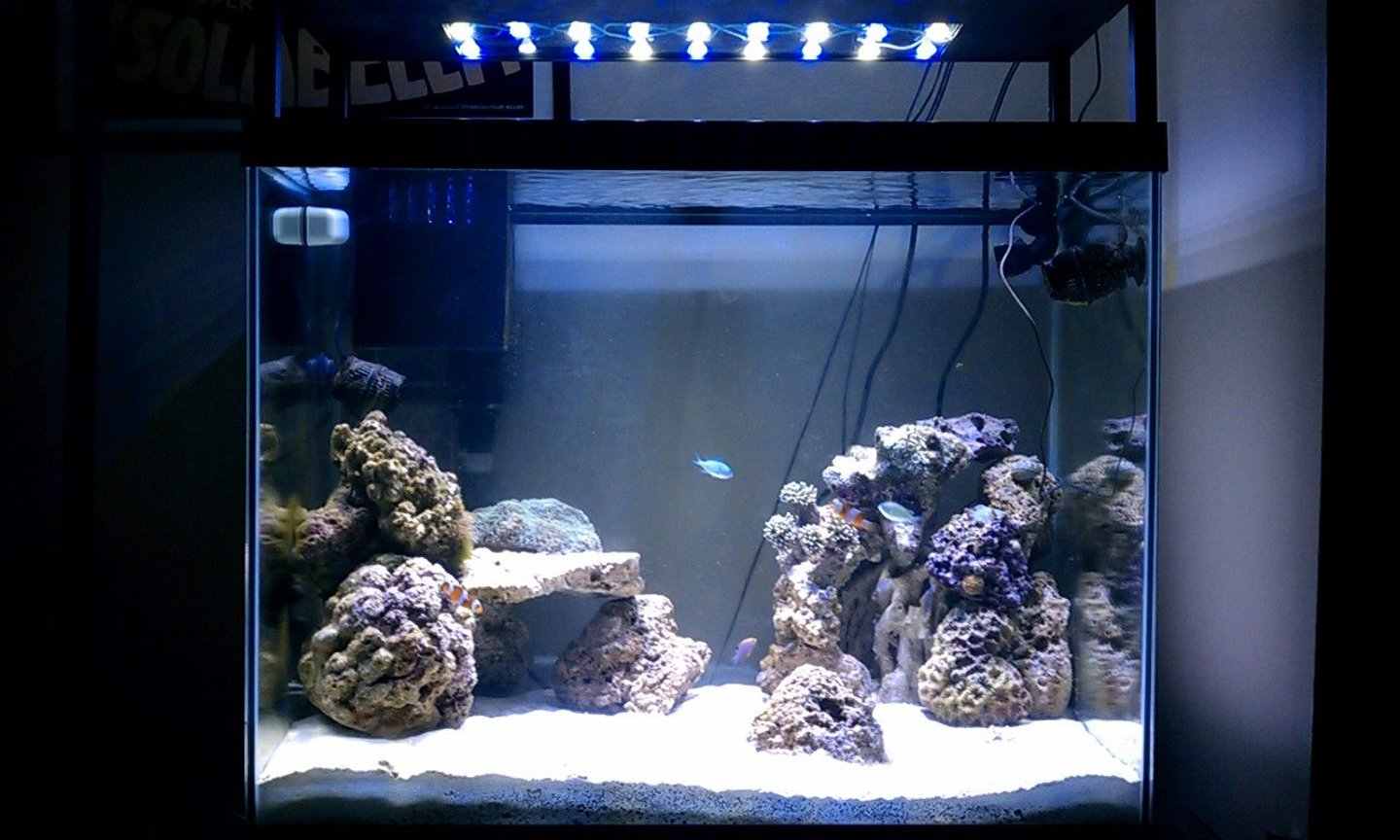 56 gallons reef tank (mostly live coral and fish) - 56gal. Column